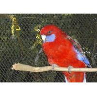 Buy cheap High Durability Stainless Steel Wire Rope Fence Mesh For Bird Cage Netting product