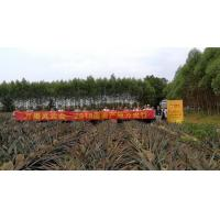 Buy cheap arrange the fruits delegation to specific fruits plantation for study from wholesalers