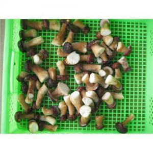 Buy cheap IQF belotus edulis in Yunnan China product