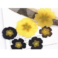Buy cheap Primula Auricula Yellow / Black Real Pressed Flowers Resin Phone Case For Aroma Candle Decoration product