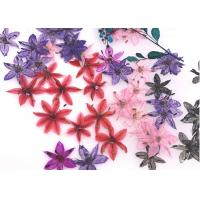 Buy cheap Wholesale Colorful DIY Pressed Natural Eternal Flowers For Time Gems Decorations product