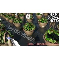 Buy cheap 2016 weed control mat ground cover mesh fabric woven polypropylene fabric in roll product