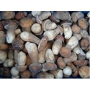 Buy cheap Frozen boletus edulis,wild mushrooms product