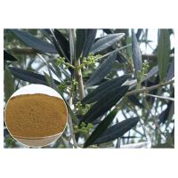 Buy cheap Hydroxytyrosol Olive Leaf Extract For High Blood Pressure CAS 10597 60 1 product