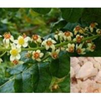 Buy cheap Standardized Extract Boswellia Sorrata Extract from wholesalers