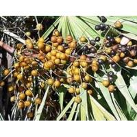 Buy cheap Hot Products Saw Palmetto Berry Extract from wholesalers