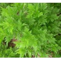 Buy cheap Hot Products Artemisia annua Extract,Wormwood Extract product