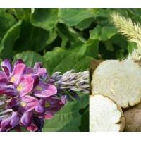 Buy cheap Hot Products Pueraria Mirifica Extract,White Kwao Krua Extract product