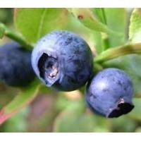 Buy cheap Hot Products Bilberry Extract product