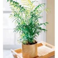 Flowering House Plants Quality Flowering House Plants