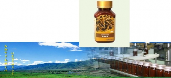 Quality Cordyseps capsules for sale