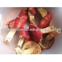 Buy cheap Red Mushroom from wholesalers