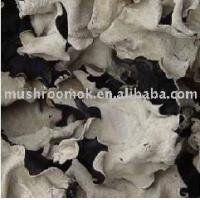 Buy cheap Spring contains fungus from wholesalers