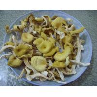 China Dried Chanterelle on sale