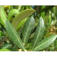 Buy cheap Standardized Extract Olive Leaf (Europe) Extract from wholesalers