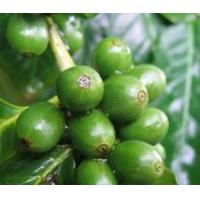 Buy cheap Hot Products Green Coffee Bean Extract. product