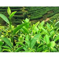 Buy cheap Senna extract product