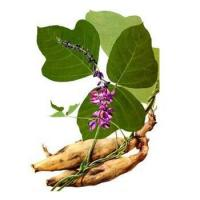 Buy cheap Kudzu Root extract product