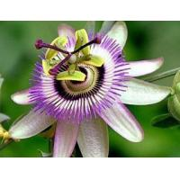Buy cheap Passion Flower extract product