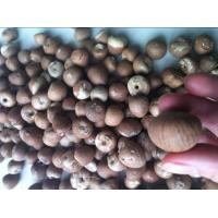 China Dried Betel Nuts Whole & Split on sale