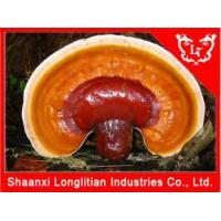 China Testosterone Supplement Top quality Reishi mushroom extract powder on sale