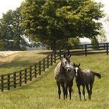 Buy cheap Centaur HTP 5 Rail Horse Fencing product
