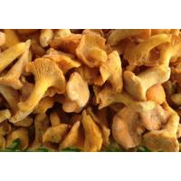Buy cheap Mushroom NAME: Frozen Chantherellus product