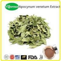 Pure Natural Apocynum venetum Extract Powder
