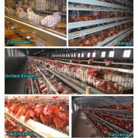 Buy cheap Cage System Chicken Cage System Poultry Farm Equipment from wholesalers