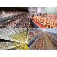 Buy cheap Cage System Chicken laying egg cages from wholesalers
