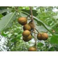 China Horse Chestnut Extract on sale