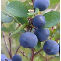 Buy cheap Bilberry P.E.(Origin of Material: China ) product