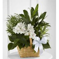 Buy cheap Sympathy Flowers The FTD Peace & Serenity Dishgarden from wholesalers