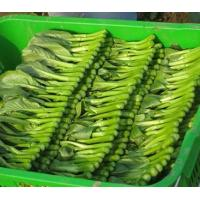 Buy cheap Vegetables from wholesalers
