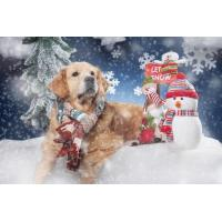 Animals Golden Retriver Wallpaper for Android, iPhone and iPad