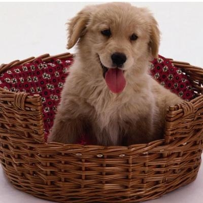 Quality wicker pet basket for sale