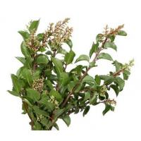 Buy cheap SUMAC Tips product