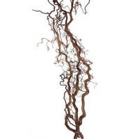 Buy cheap Walking Stick 3'- 4' (Looks like Curly Willow) product