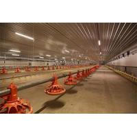 Poultry Lighting System