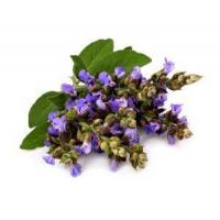 Buy cheap 100% Pure Natural Clary Sage Essential Oil For Hair, Perfume Clary Sage Oil product