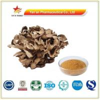China Factory Supply Maitake Extract/Wholesale Grifola Frondosa Extract on sale