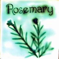 Buy cheap Herbs Rosemary product
