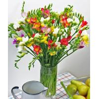China Mother's Day Flowers Luxury Freesias on sale