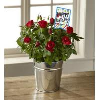Buy cheap The FTD Bright & Happy Birthday Mini Rose by Hallmark from wholesalers