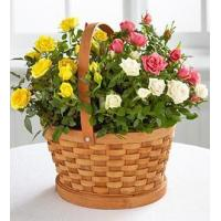 Buy cheap Sympathy Flowers The Better Homes and Gardens Rose Garden Basket from wholesalers