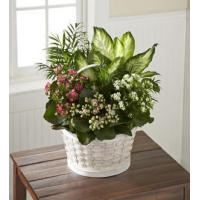 Buy cheap The FTD Rural Beauty Dishgarden from wholesalers