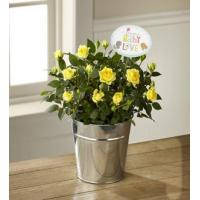 Buy cheap The FTD Precious Baby Mini Rose by Hallmark from wholesalers