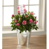 Buy cheap The FTD You Are My Love Mini Rose by Hallmark from wholesalers