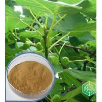 Buy cheap Anti-aging Olive Leaf Extract Model: H1008 from wholesalers