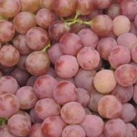 Buy cheap Anti-Oxidant Grape Skin Extract Model: A1004 from wholesalers